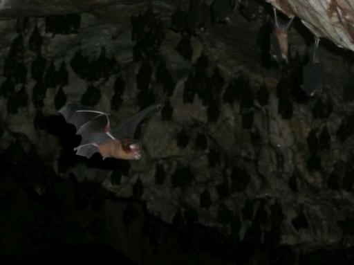 vleermuizen donker